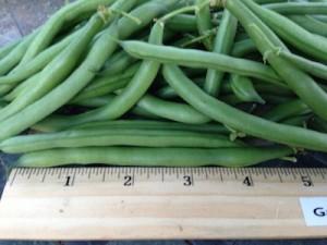green beans are always best fresh.