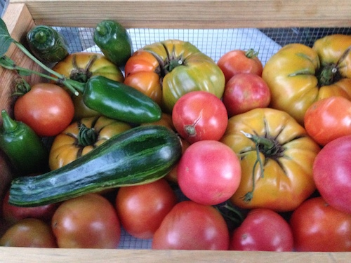 Peppers, zucchini, tomatoes, are in high production.