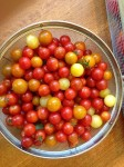 There were more cherry tomatoes but I ate them while getting them ready for the fruit dryer.