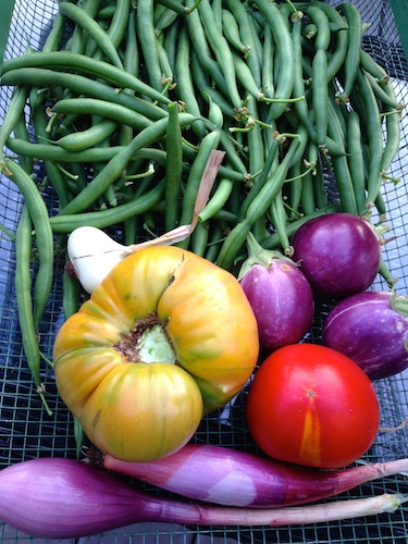 Green beans, tomatoes, mini eggplants all grown in container on the deck.