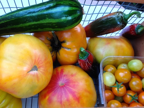 summer squash, tomatoes and cherry tomato, sweet pepper