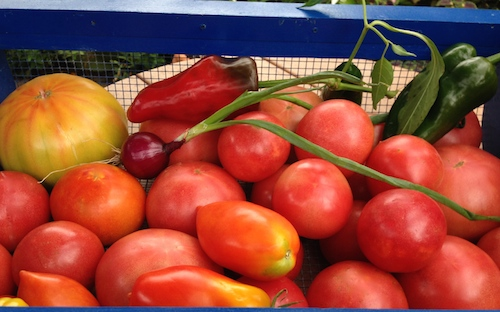 Plum tomatoes, Arkansas traveler, Giant Martian, Gold Medal